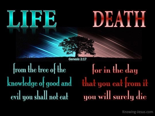 Genesis 2 17 But From The Tree Of The Knowledge Of Good